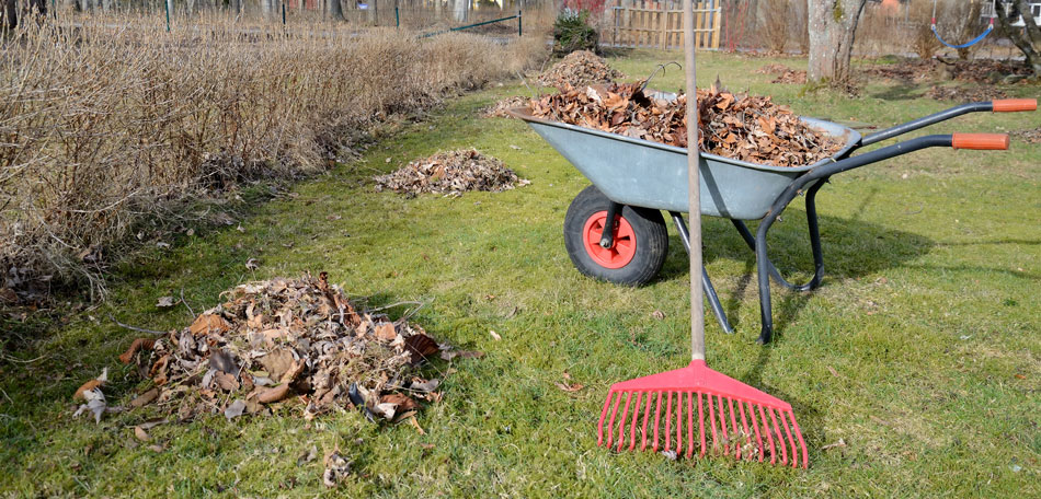Spring Yard Garden Clean Up Services Toronto